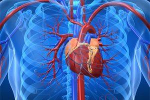 Ученые рассказали, как появляются отложения кальция в сердце