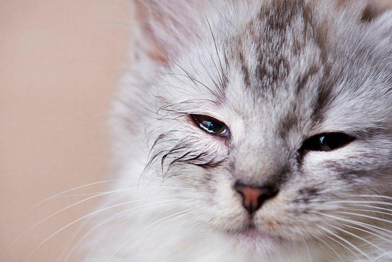 Аллергия на домашнего любимца: как бороться?