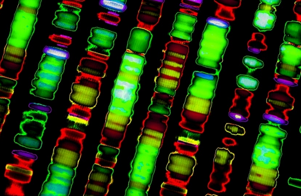 Биологи заново пересчитали гены в человеческой ДНК