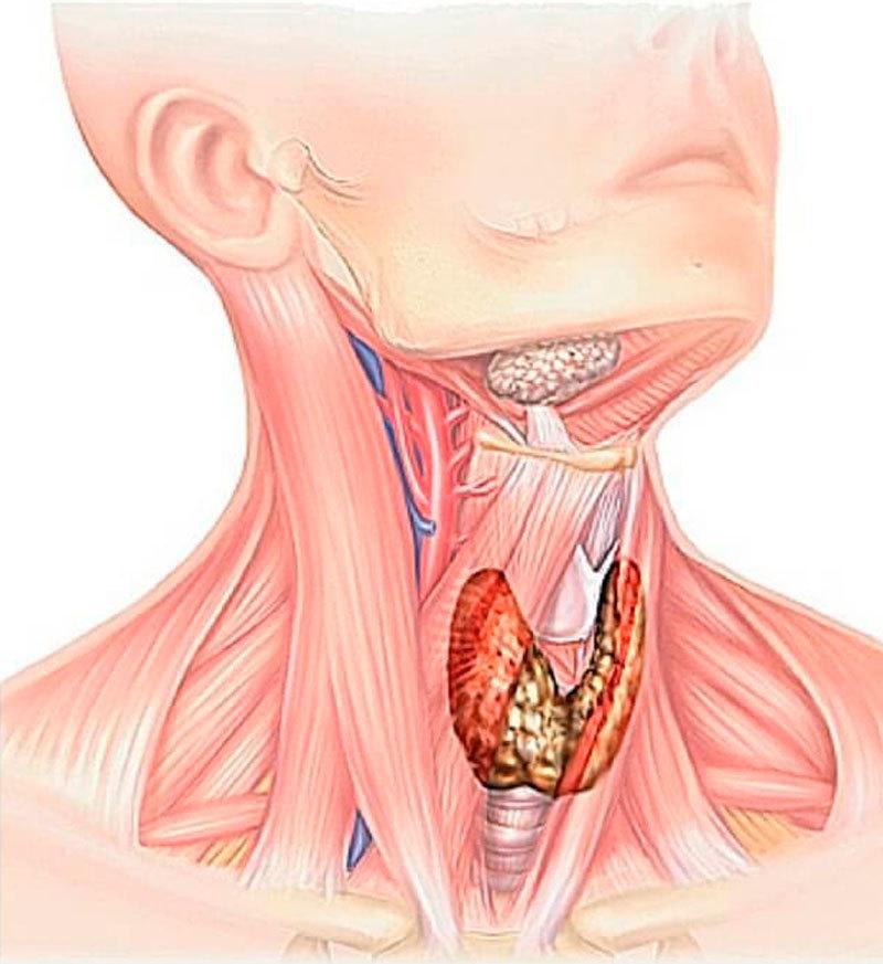 Симптомы эндокринной патологии