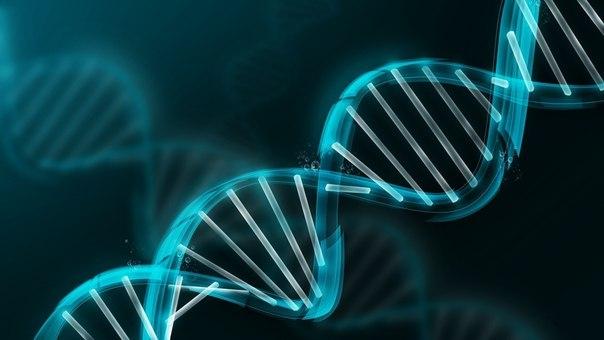 «Спасибо» за плохую фигуру вы можете сказать генам, уверены ученые