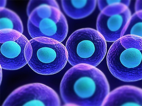 Новая тест-система позволила найти лекарство для лечения редкой опухоли мозга