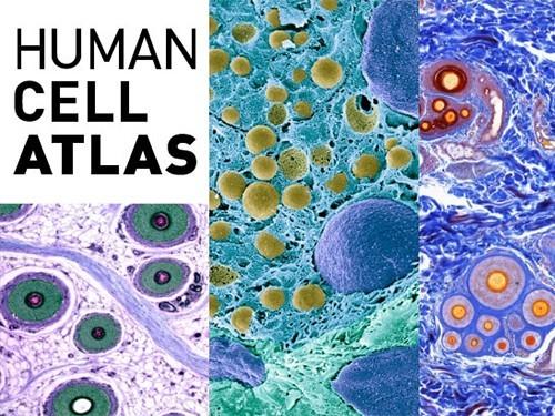 Запущен проект по созданию атласа клеток человека