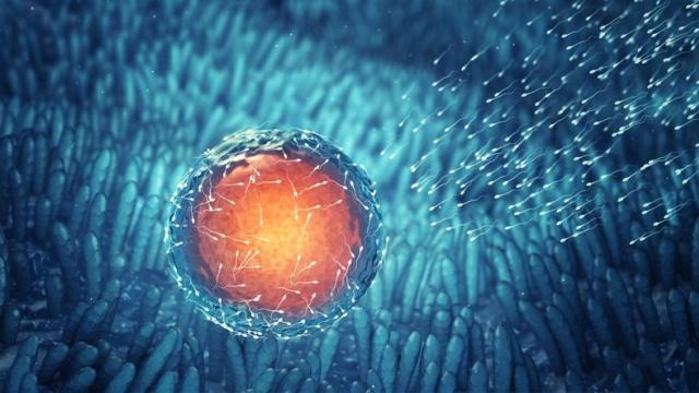 Препараты против рака могут увеличить число яйцеклеток у женщин