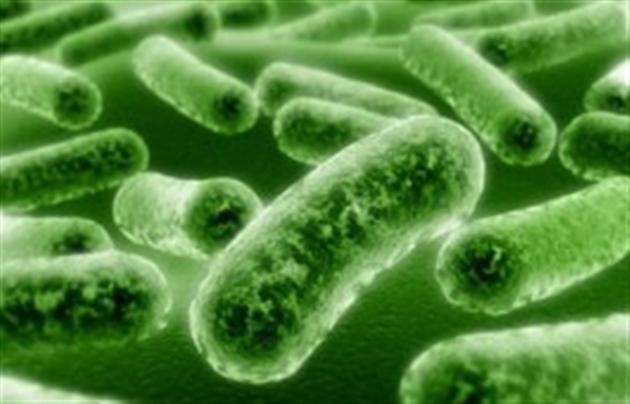 Профилактика и лечение грибковых инфекций