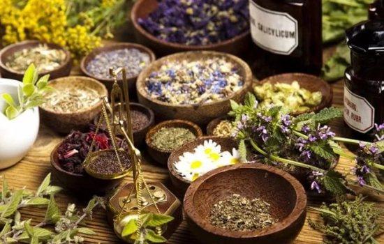 Десятка полезных для человека трав: основы лечения растительными препаратами