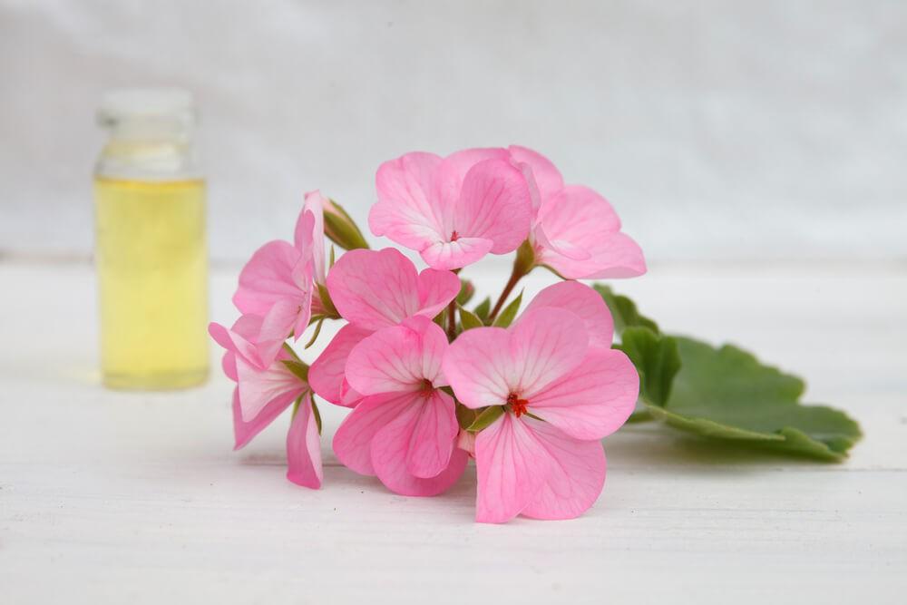 Как можно использовать эфирное масло розовой герани?