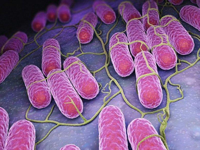 Пищевые отравления будут лечить бактериями