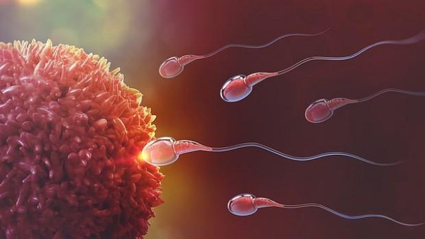 Ученые обнаружили ген, связанный с мужским бесплодием