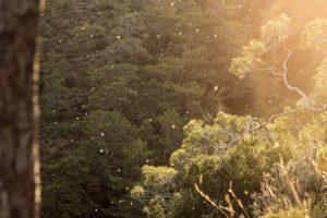 После дождя в воздухе остается большое количество аллергенной пыльцы