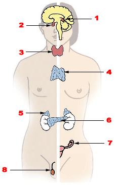 Симфония гормонов и женское здоровье