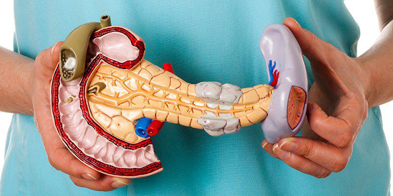 В чем связь: инсулин и поджелудочная железа