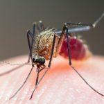 Малярия: симптомы, возбудители, лечение